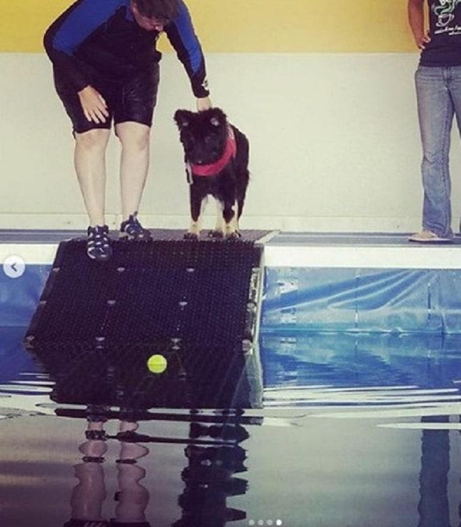 Овчарка в бассейне