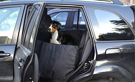 собака в автогамаке