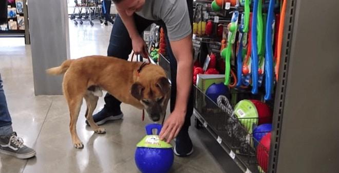 Собака и мяч