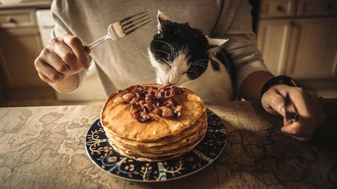 Кот кушает
