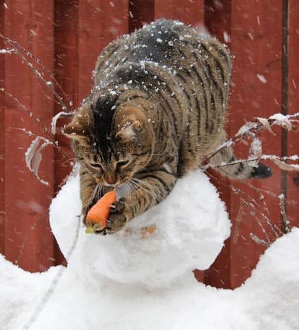 кот ворует нос у снеговика