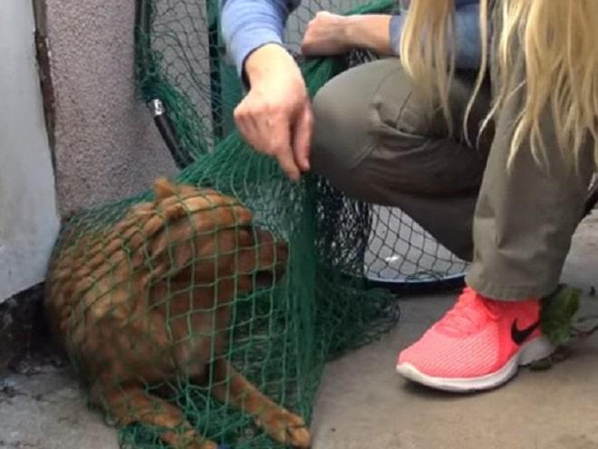 Собака в сетке
