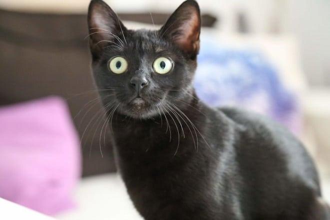 Удивленная кошка