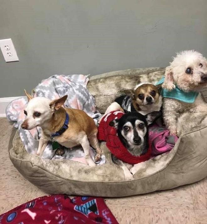 Собаки на кроватке