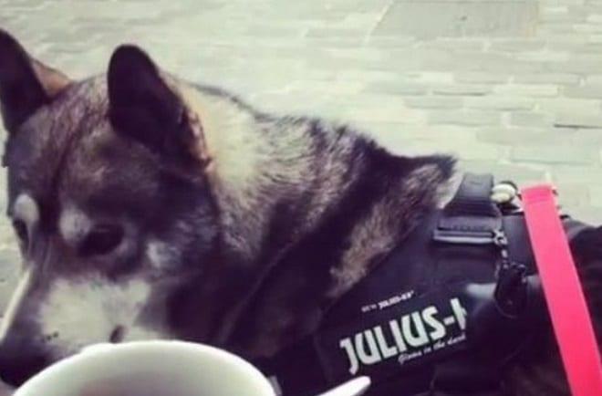 Собака в желете