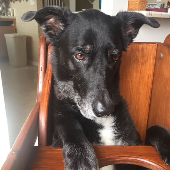 собака на стуле рис 2