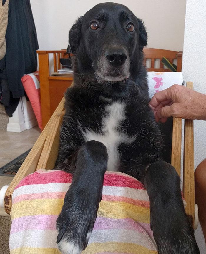 собака на стуле рис 3
