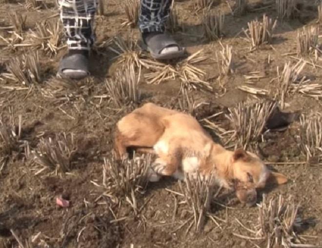 Собака на земле