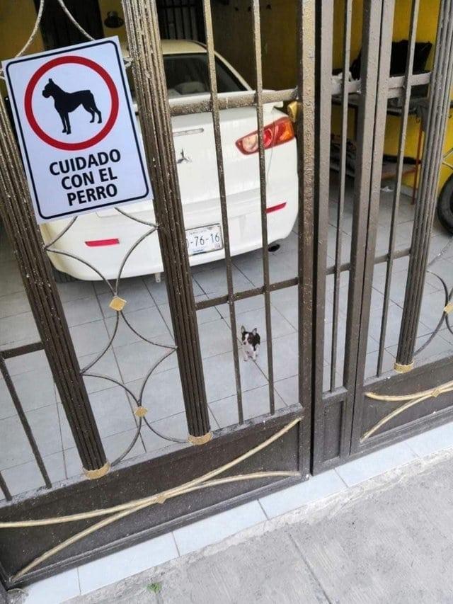 собака за забором
