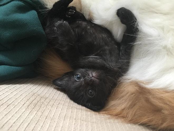 Котенок лежит