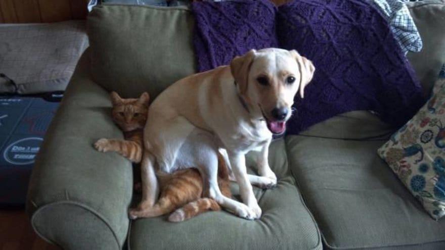 собака села на кота