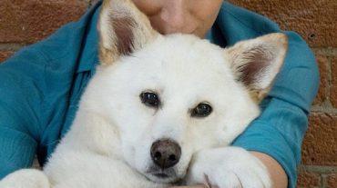 lovely white dog