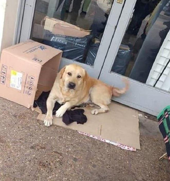 Пес у двери