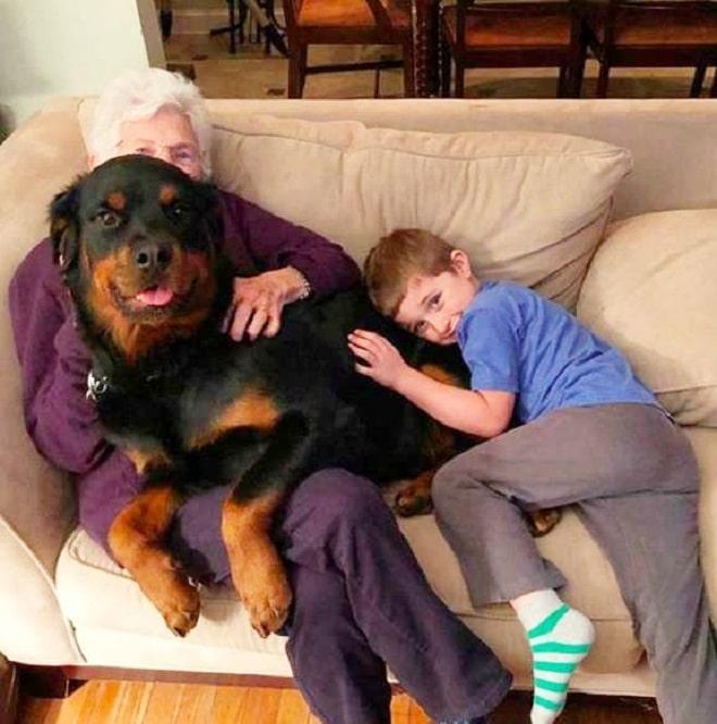 Собака и люди
