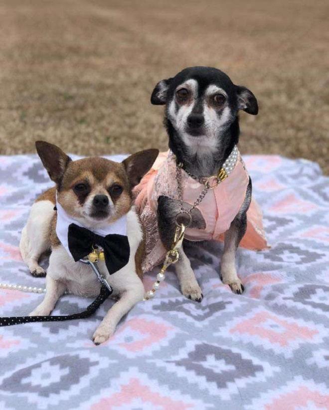 Собаки на пледе