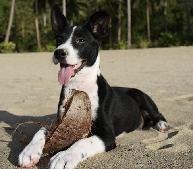 Веселый пес