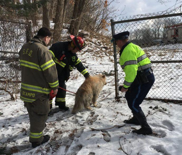 Спасение пса