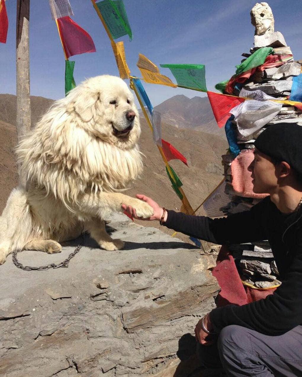 собака дает лапу