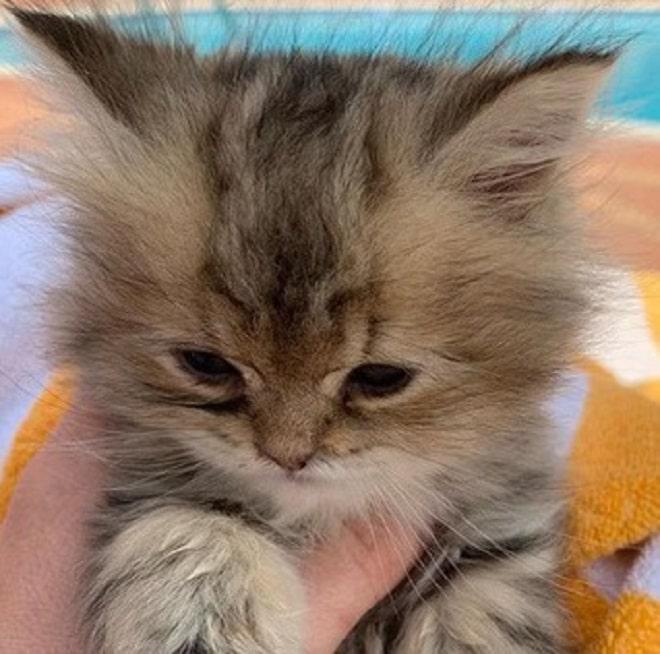 Котенок в руке