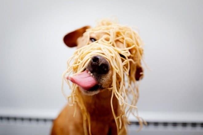 Пес и спагетти