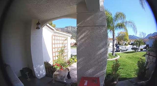 собака во дворе рис 2