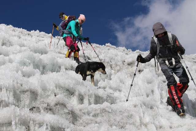 собака в горах рис 2