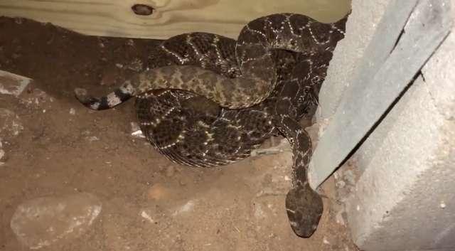 змеи в подвале