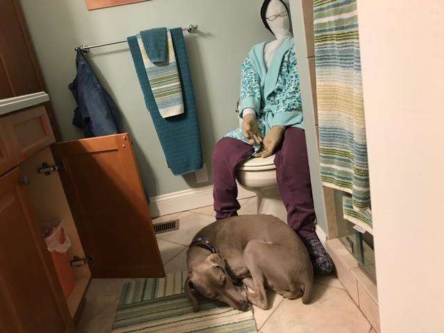 собака в ванной