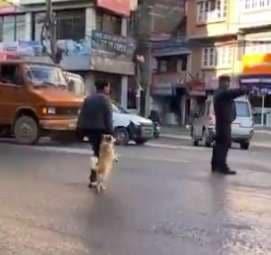 собака переходит дорогу с хозяином