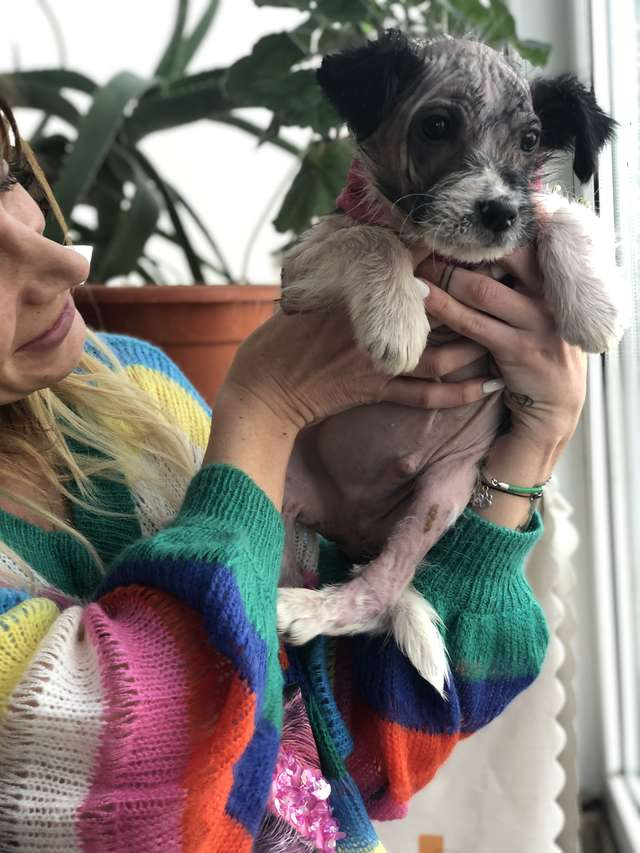 щенок на руках