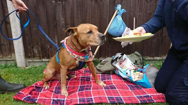 собака на пикнике