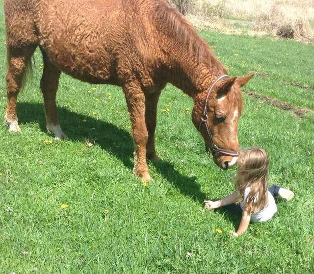 лошадь с ребенком