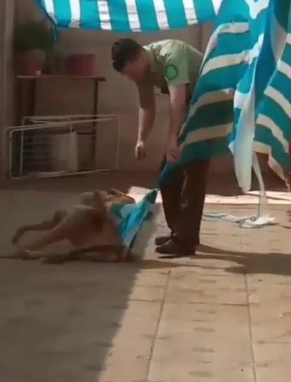 пес и полицейский