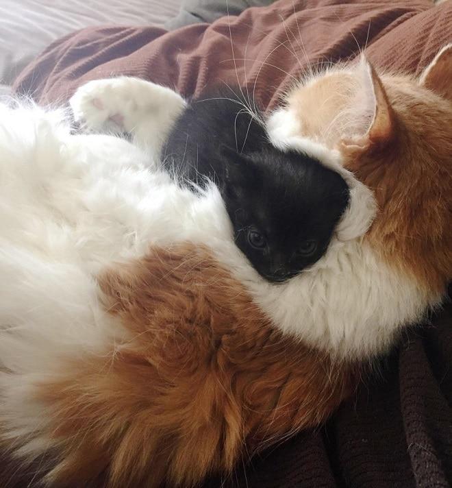 Котики обнимаются