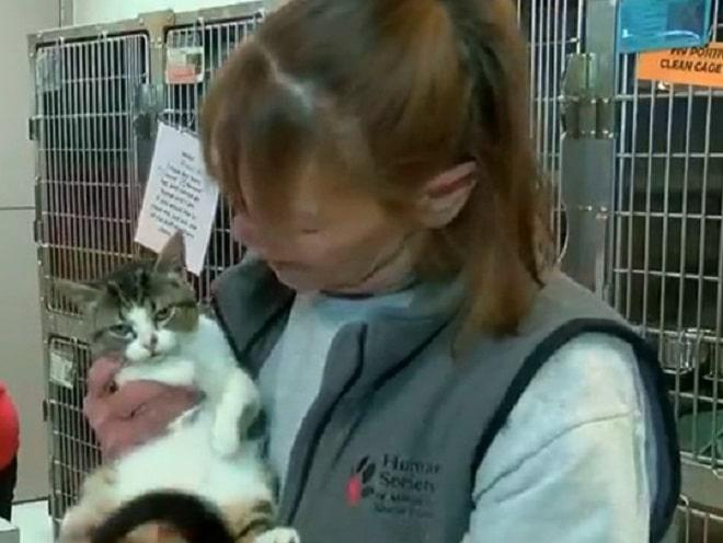 Котик с женщиной