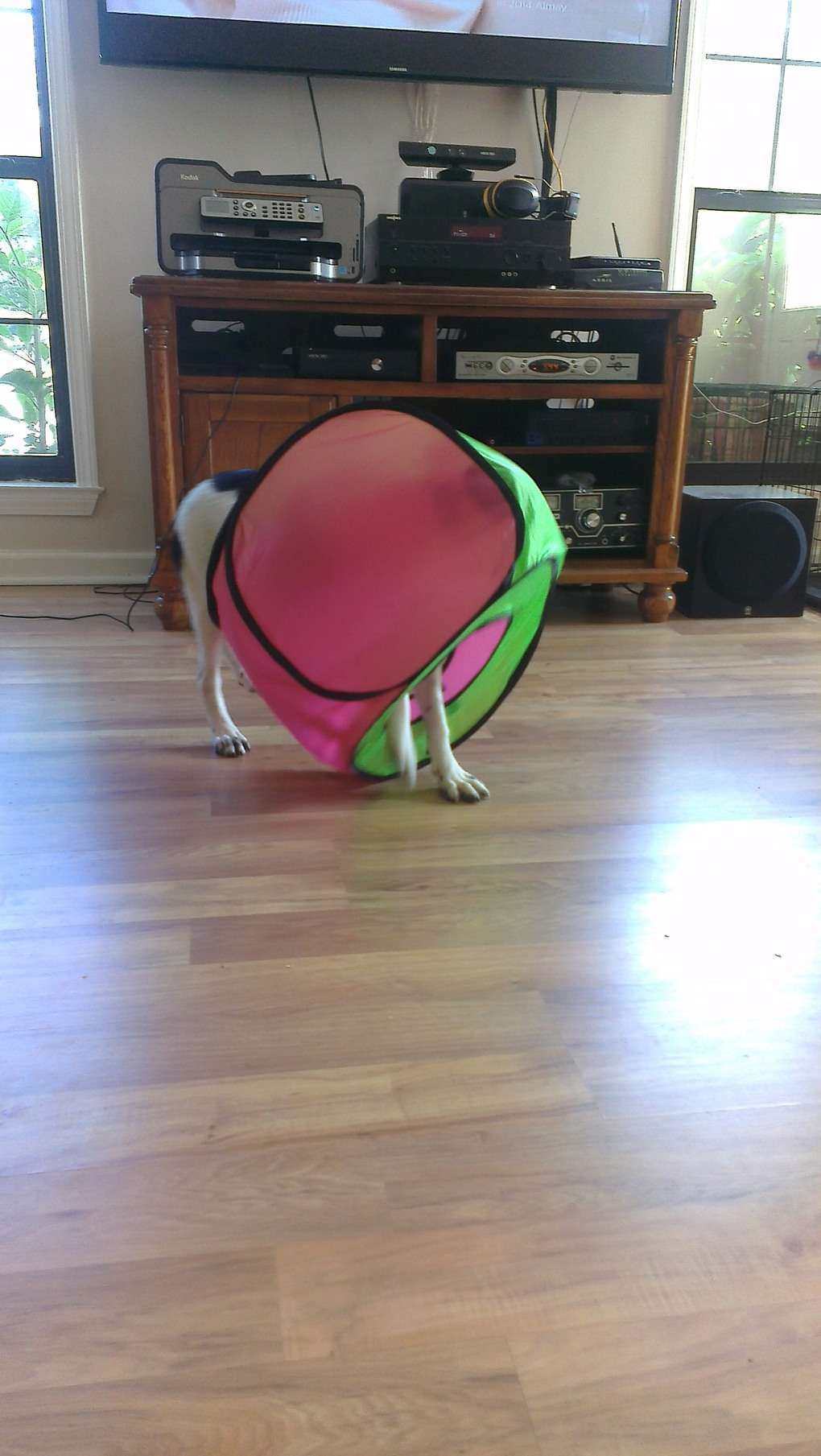 собака играет