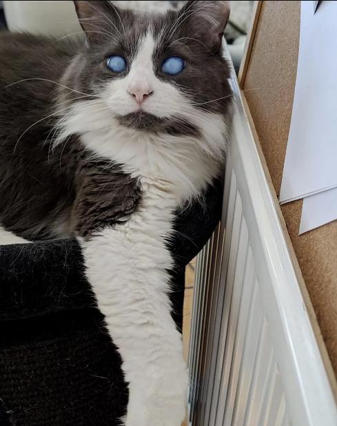 слепой кот