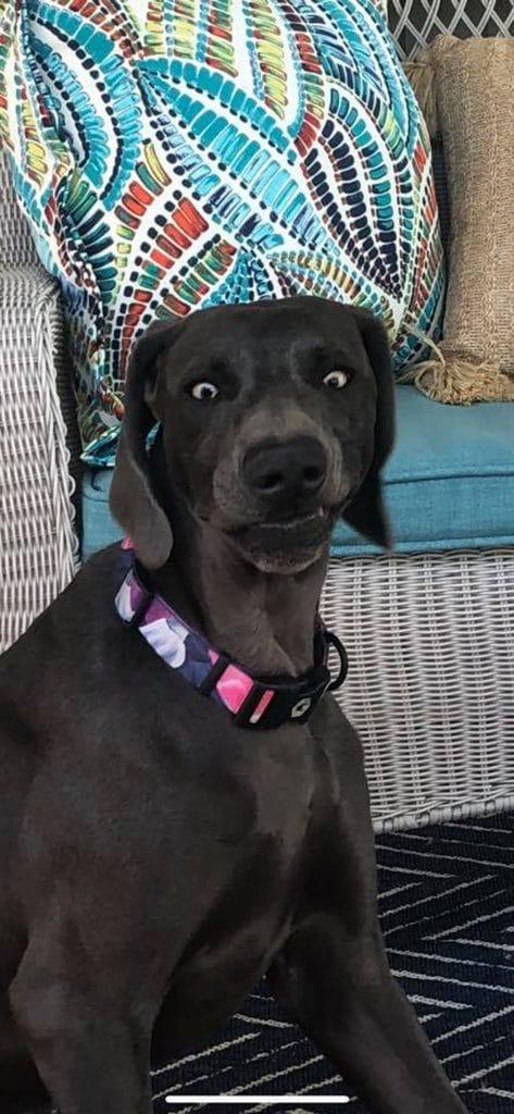 удивленная собака