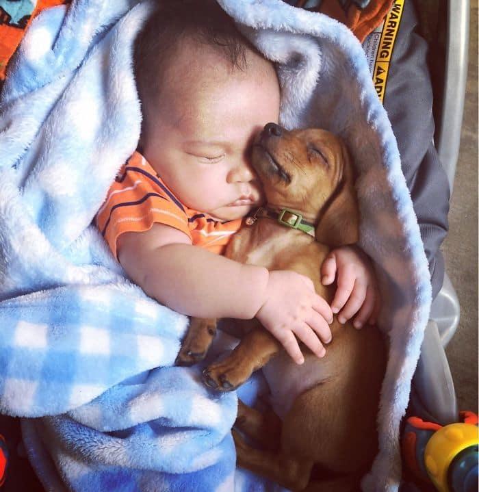 ребенок спит со щенком