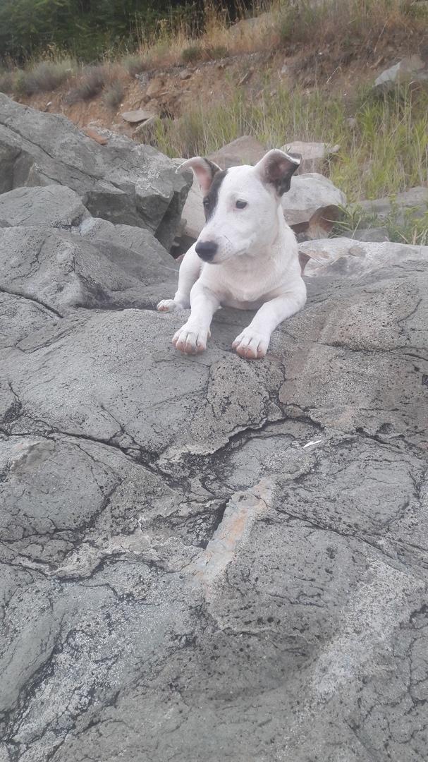 собака сидит на скалах