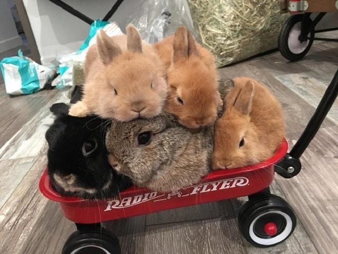 Пять кроликов