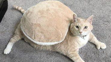Cat, the tortoise