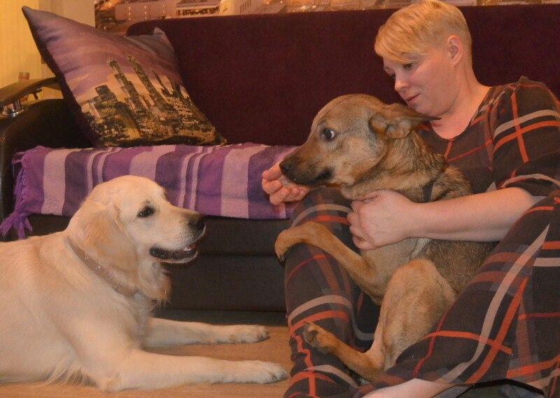 собаки с хозяйкой