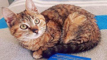 Kitty Nala