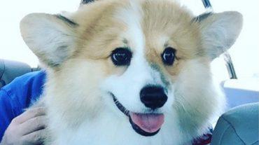 Lovely Max
