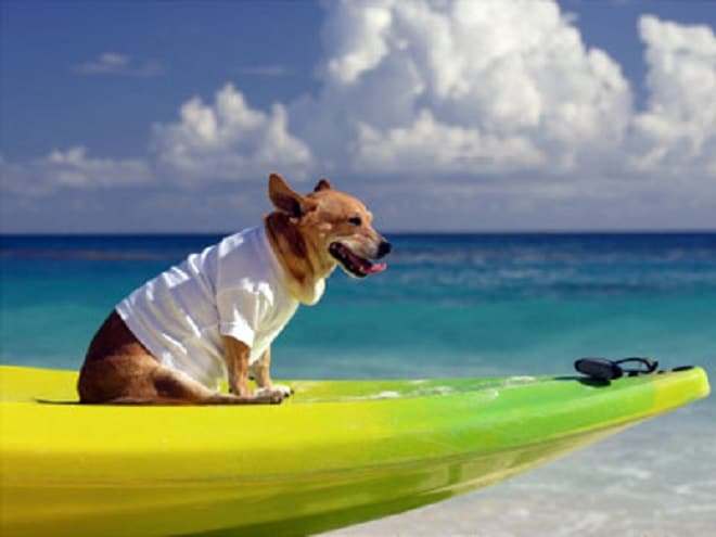 Собака на доске