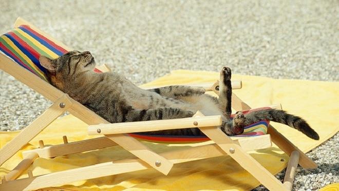 Кошка на лежаке