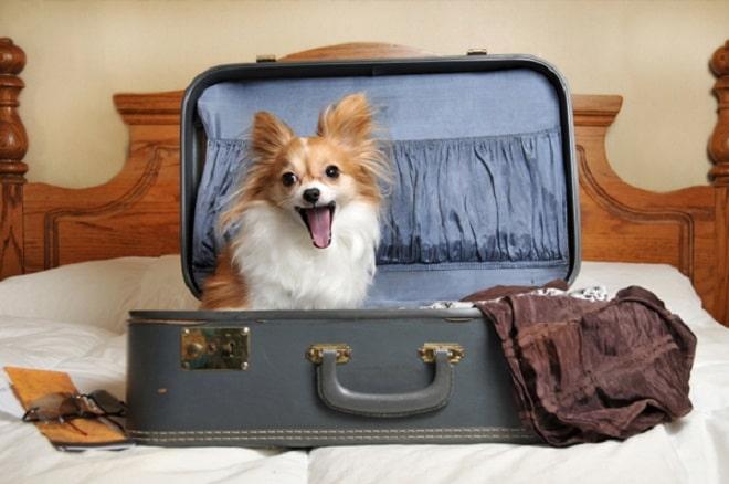 Собачка в чемодане