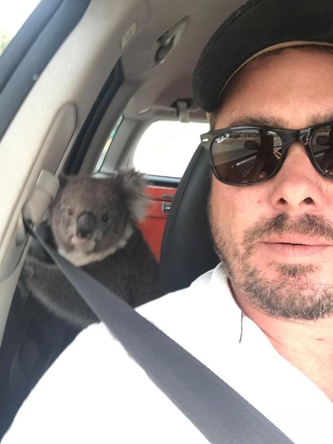 Мужчина и коала