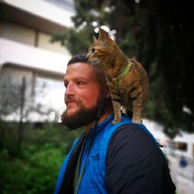 Кошка на плече